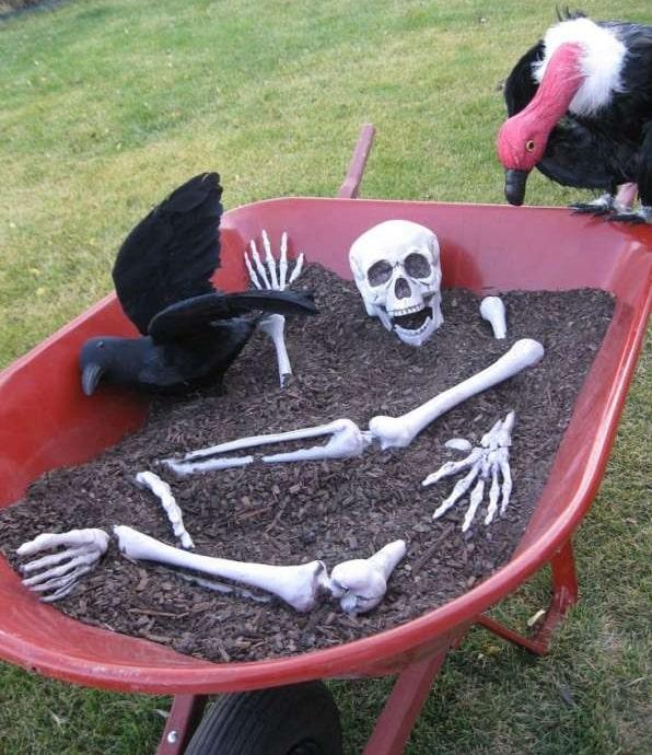 Photo d'un squelette dans une brouette déco pour halloween
